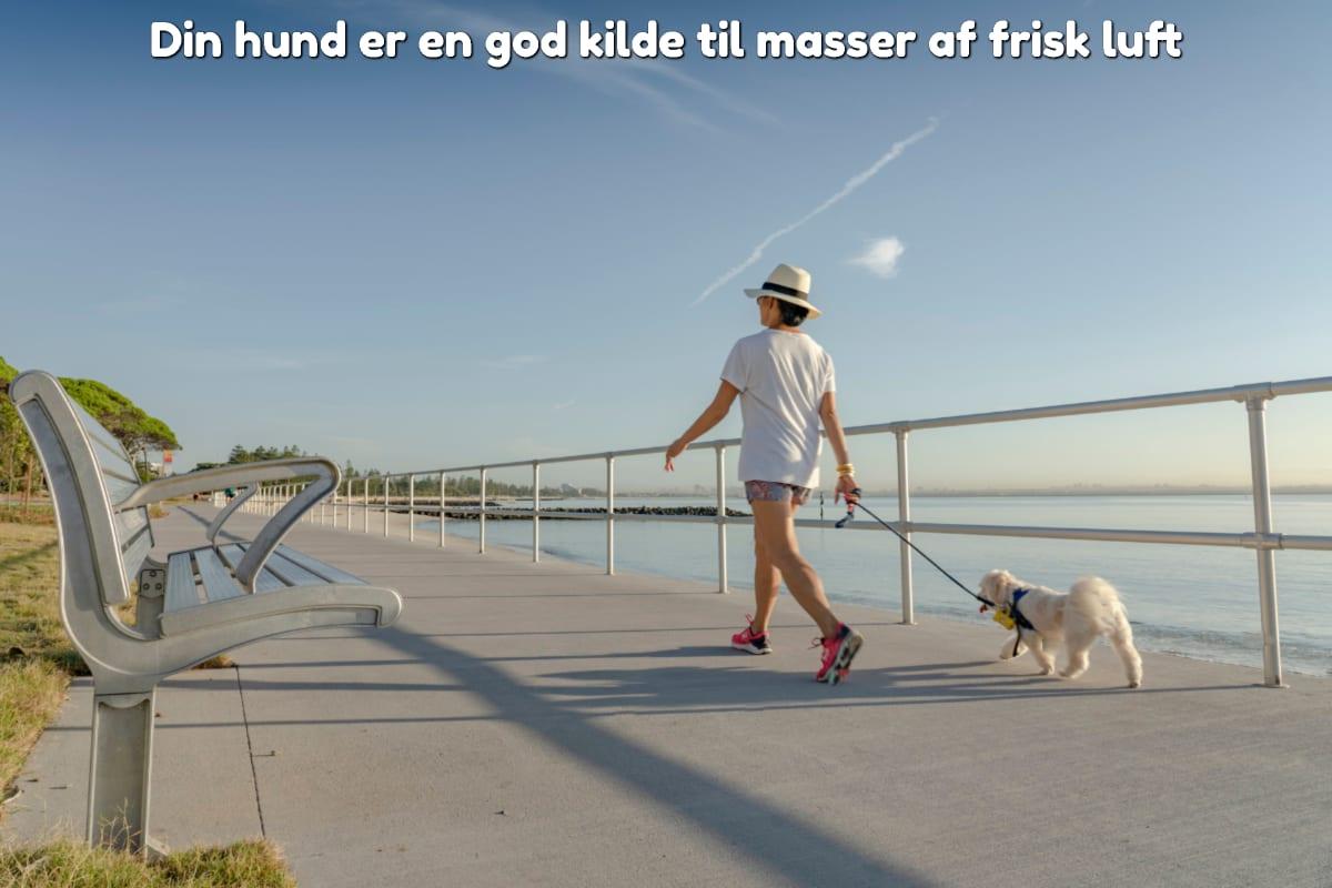 Din hund er en god kilde til masser af frisk luft