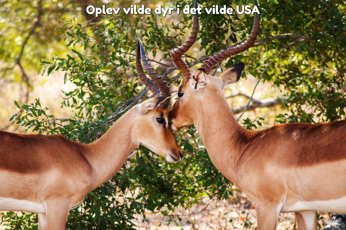 Oplev vilde dyr i det vilde USA