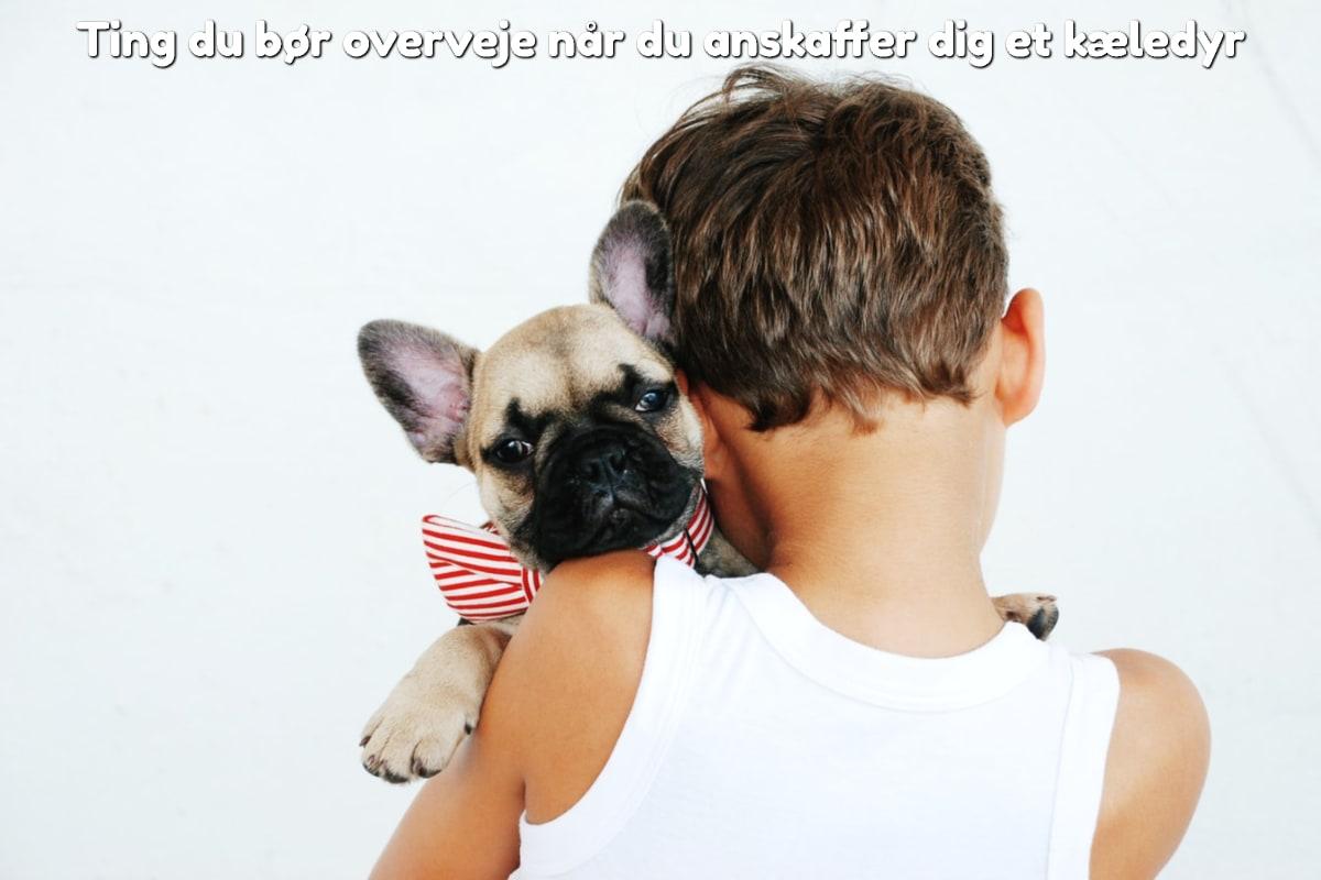 Ting du bør overveje når du anskaffer dig et kæledyr